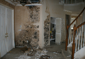 Mold Removal Specialist Near Me